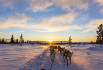 odog-husky-sled-sledge-driving-experience-tailor-made