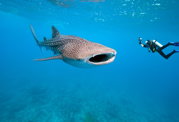 whale-shark-encounter-face-to-face-touch
